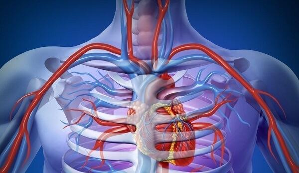 Cirurgião Vascular em Curitiba: A imagem mostra uma caixa torácica com a pele transparente, as veias e aortas destacadas em vermelho e azul respectivamente, assim como o coração por entre as costelas. Destacam-se também alguns vasos sanguíneos, área de atuação cirúrgica deste profissional médico.