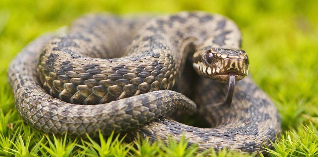 Incórpore Centro Médico: Picada de cobra